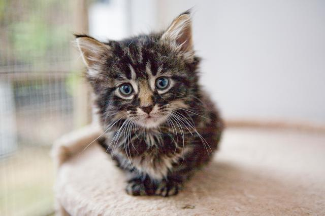 Kitten Kit