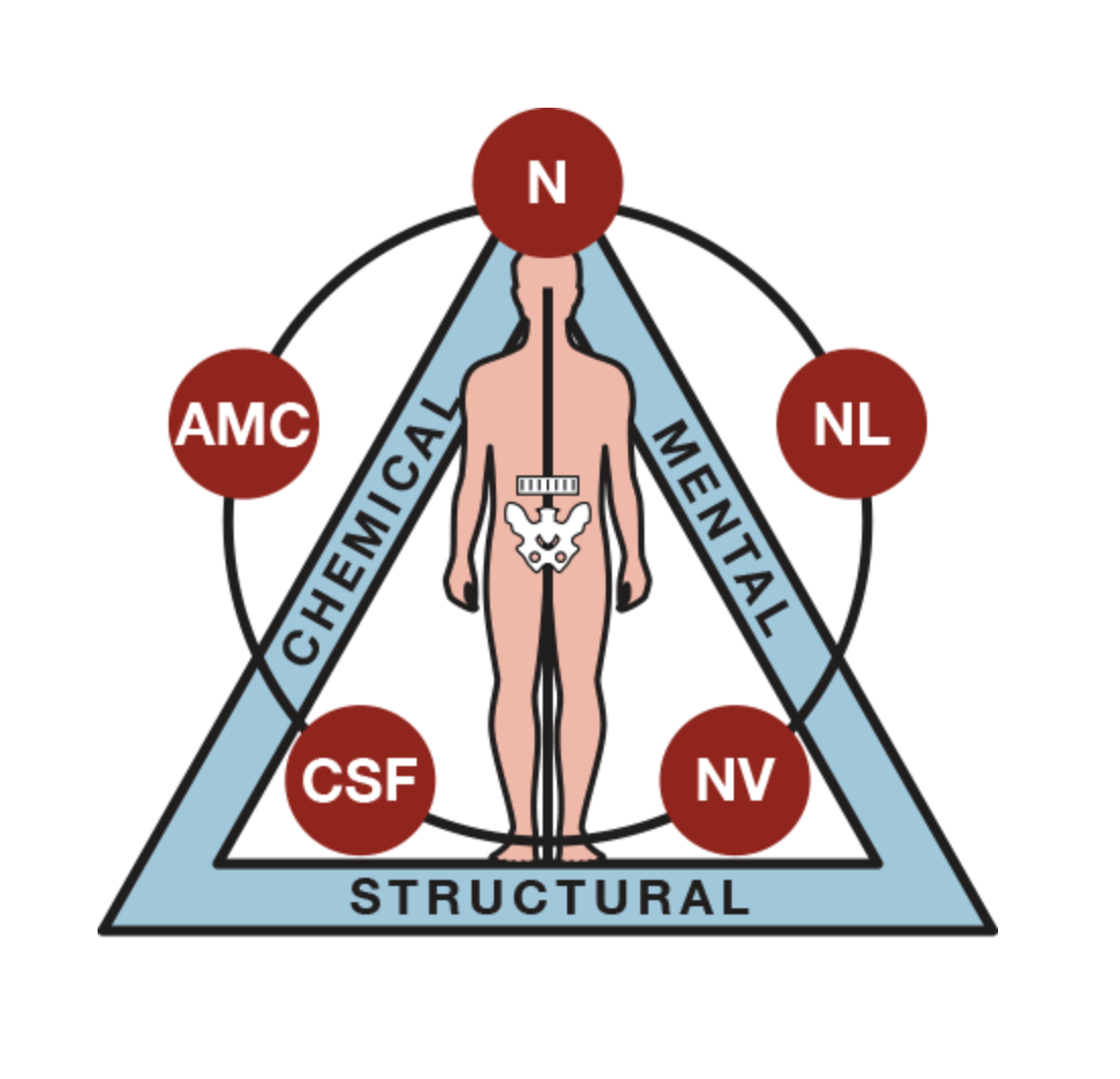 applied kinesiology.png