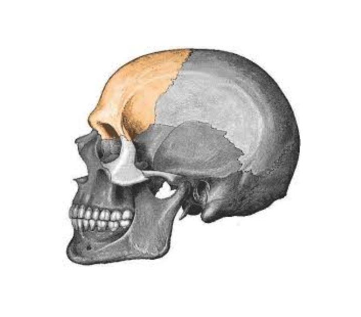 sacro occipital technique.png