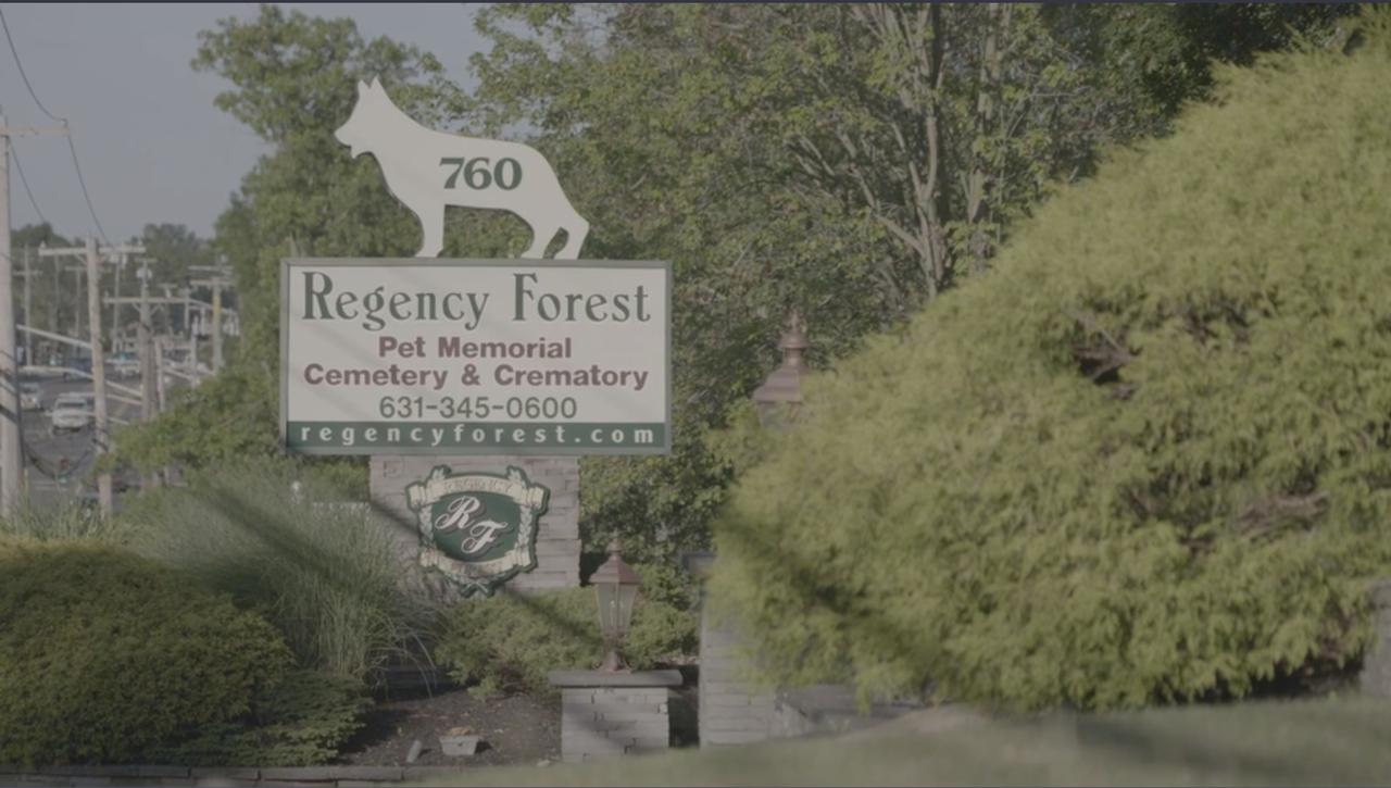 regency forest.png