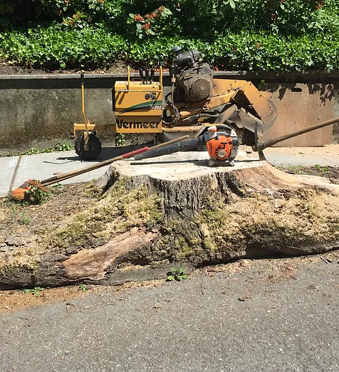 removing a stump from a sidewalk