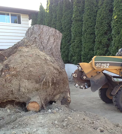removal of a very large stump