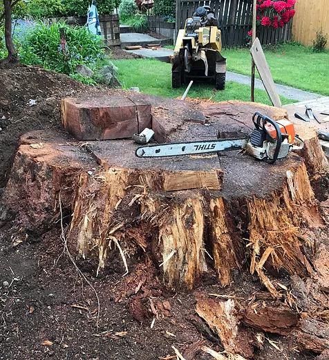 preparing a stump to be removed from property