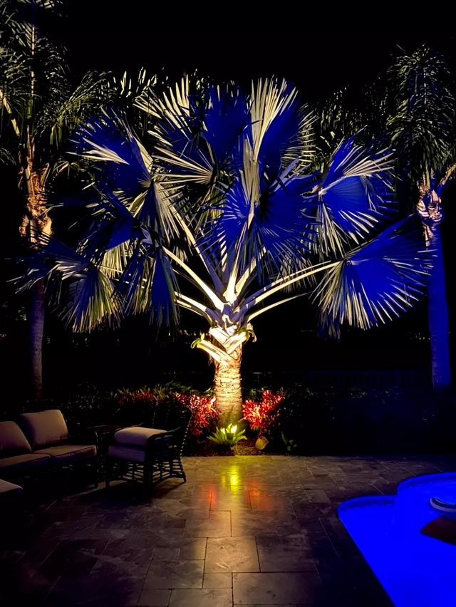 palm lighting