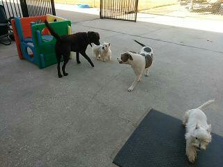 website-review-images/Puppies playing at the kennel.jpg