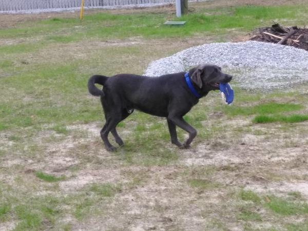 website-review-images/Talk to the Paw Customer's Dog Named Bison.jpg