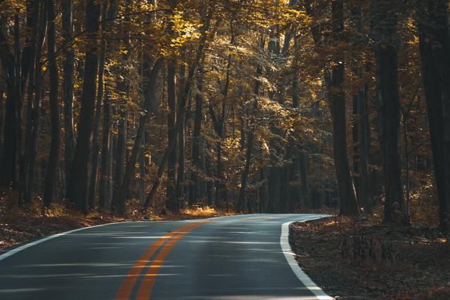 Image of a road through the woods where a car accident attorney might find work.