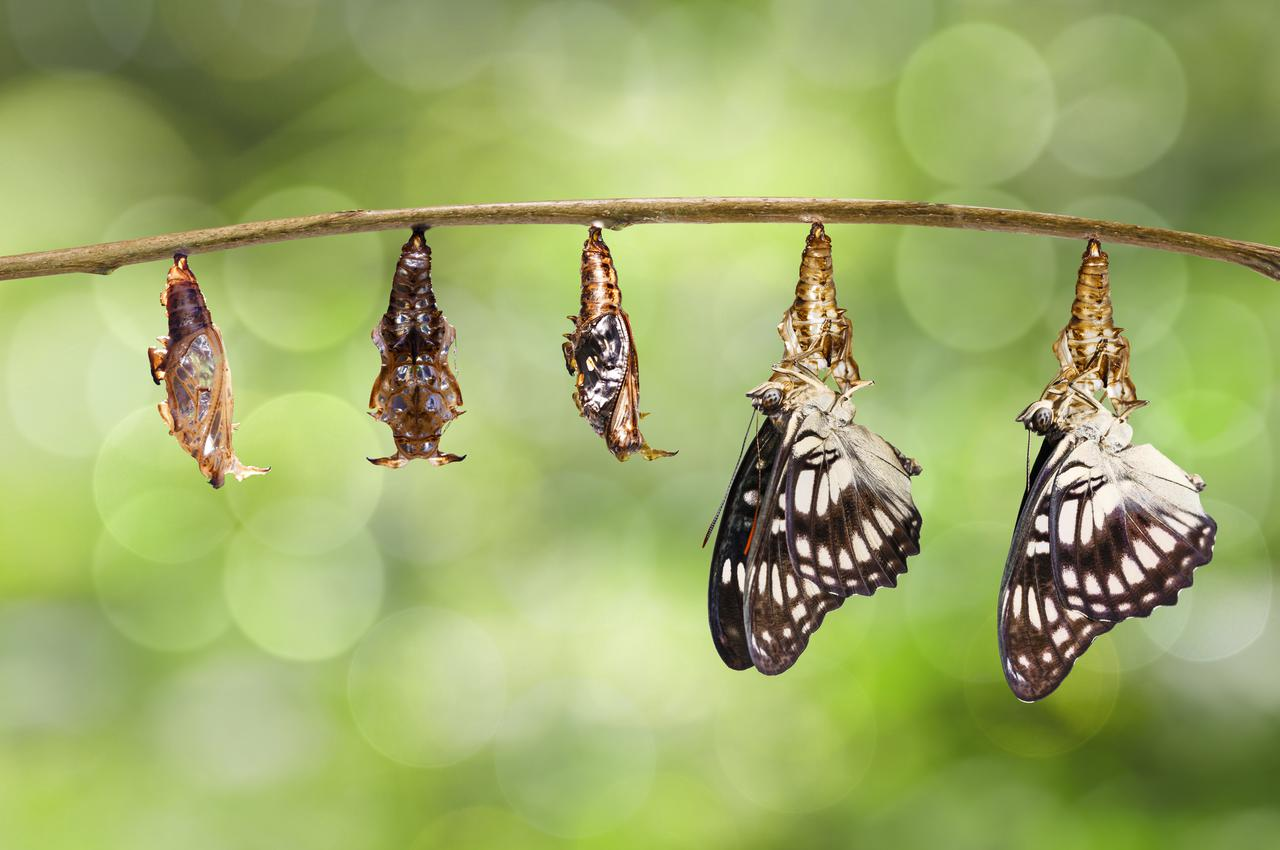 butterflies are an example of thriving with change and transition