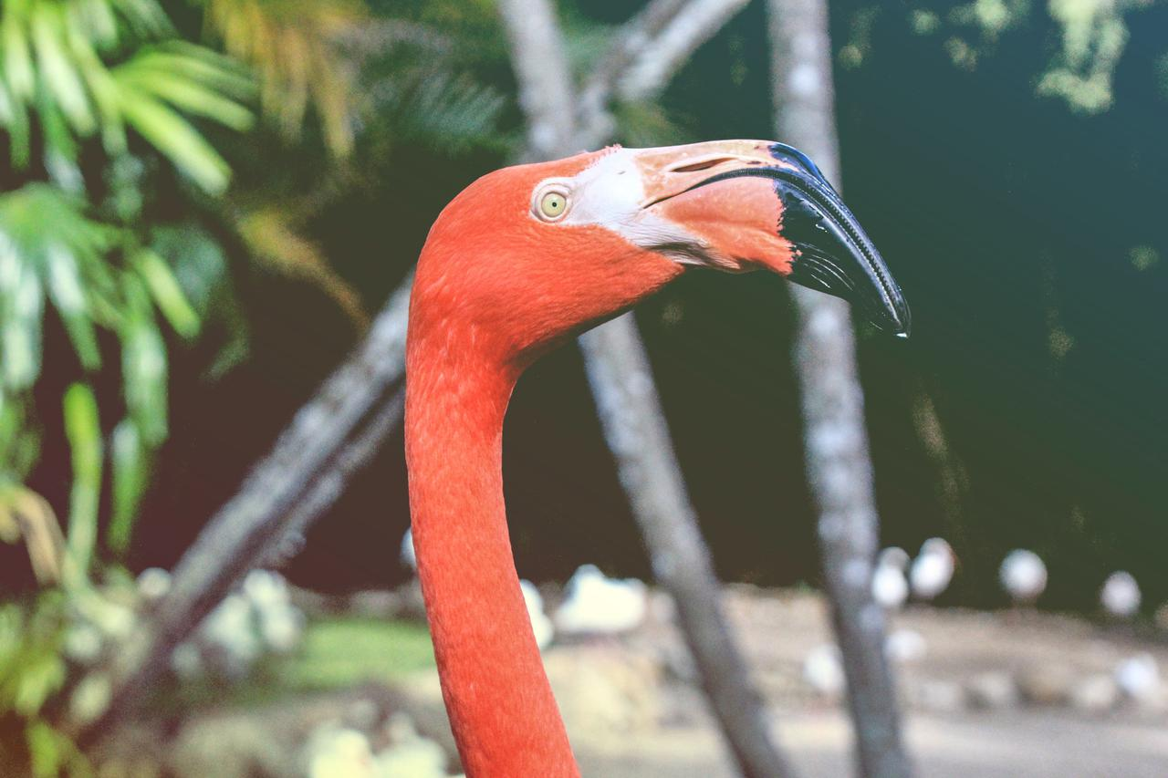 I was at Flamingo Gardens in Florida and this beautiful bird just stood there making complete eye contact with me and I just had to take its photo. She was absolutely stunning.