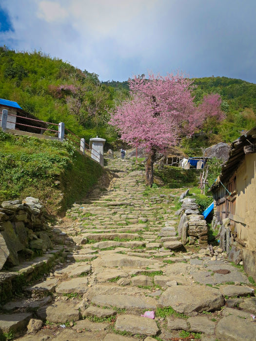 Ghorepani-Poon-Hill-Trek-Nepal-1-02.jpg