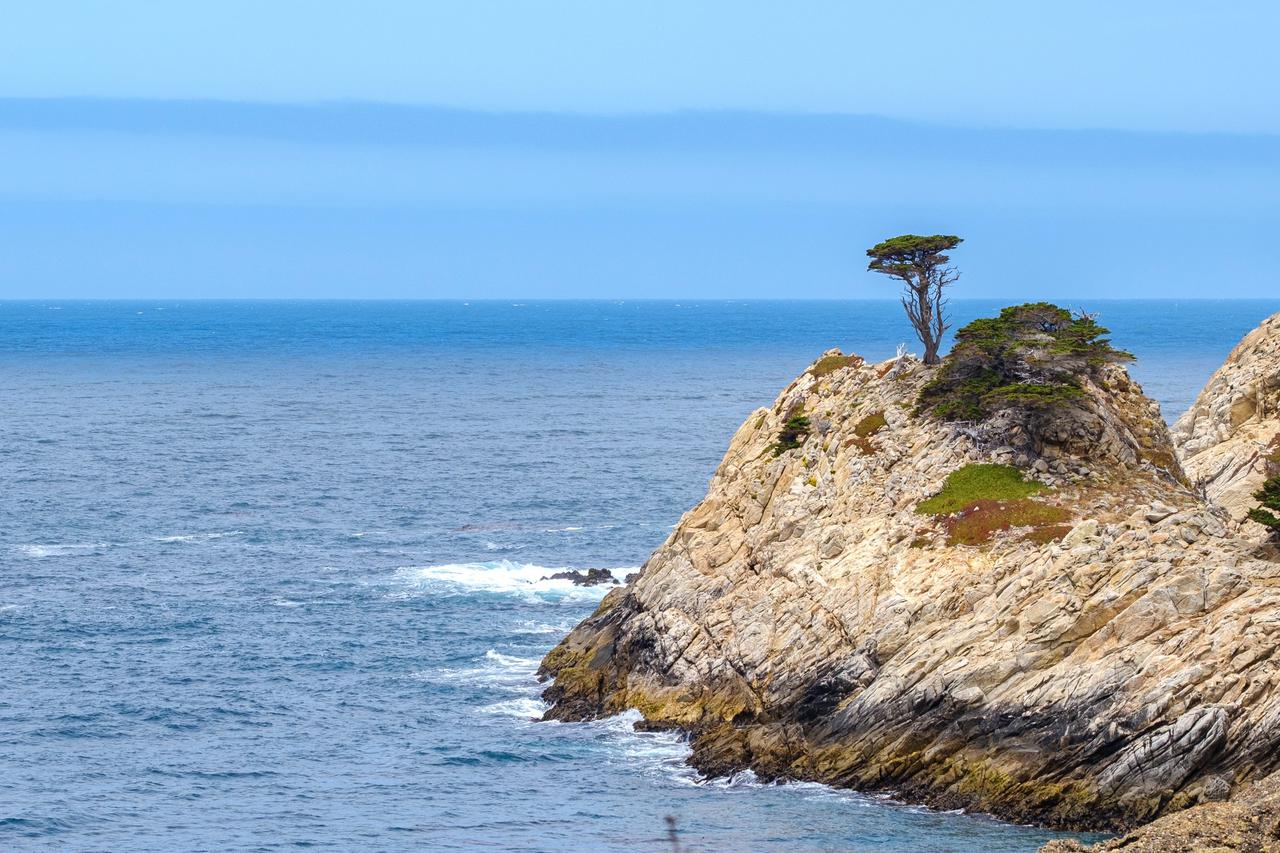 Lone cypress tree on the rocky shores of the rocky Pacific Coast in Northern California. Point Lobos Park