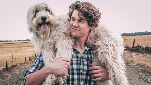 large dog breeds get dog beds laundered by boston laundry