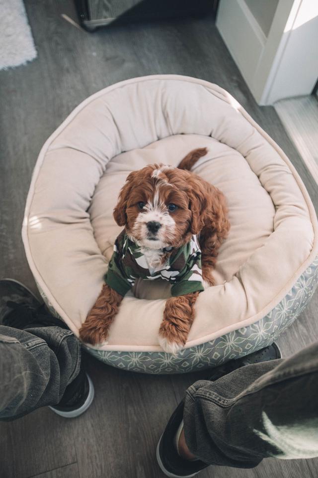 boston laundry inc dog bed laundering