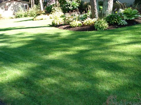 Lawn Renovation & Fall Services