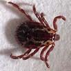 Hybrid Flea/Tick/Mosquito programs