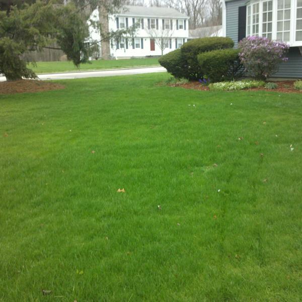 Hybrid lawn Care Programs