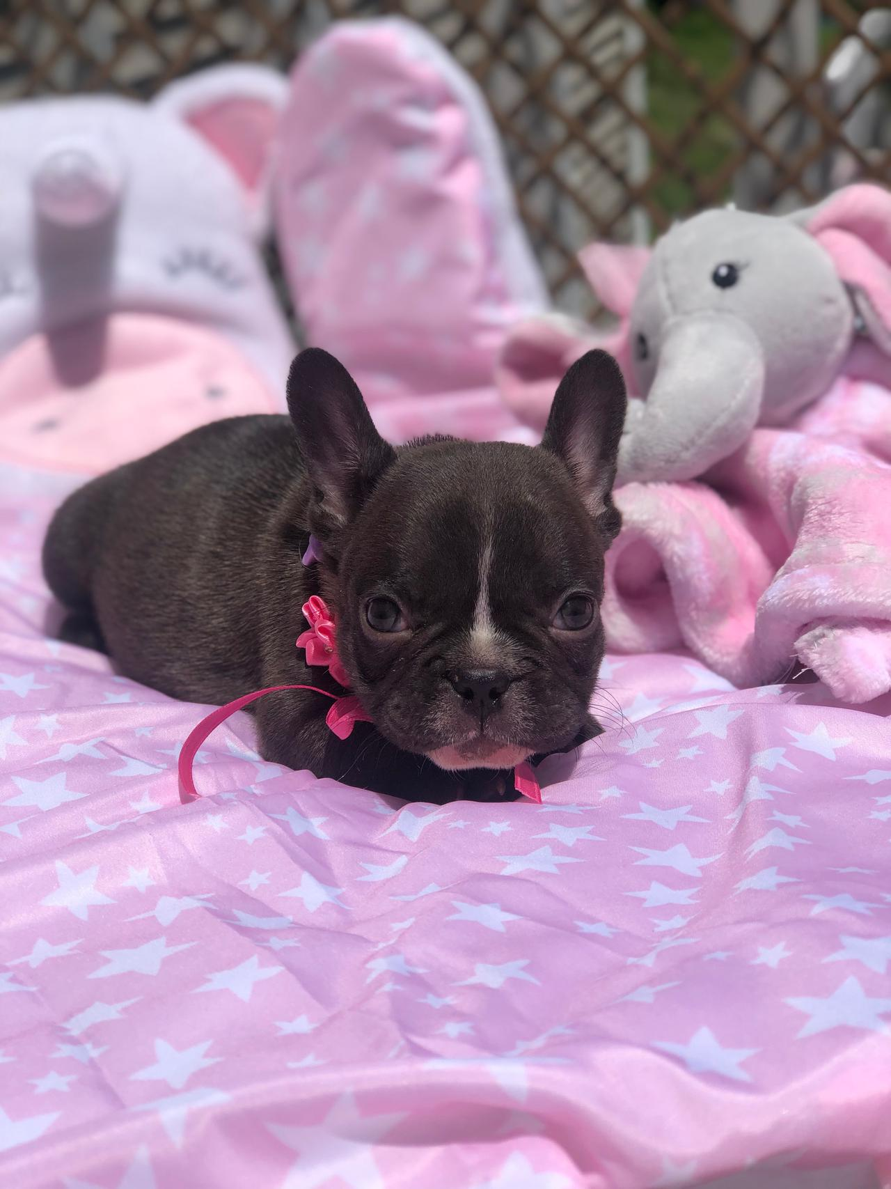 Stella tiny chocolate girl   AVAILABLE