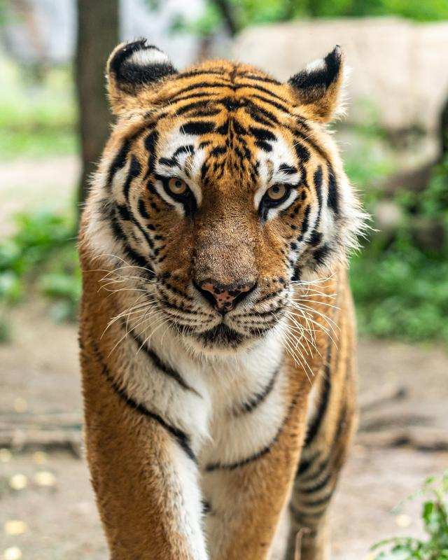 <strong>What the Netflix Series <em>Tiger King</em> Can Teach You About Asset Protection Planning - Part 3</strong>