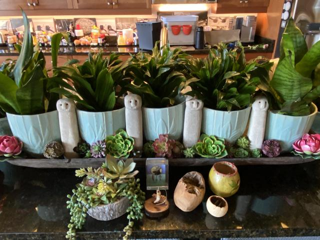 condo 20 green pot plants.jpeg