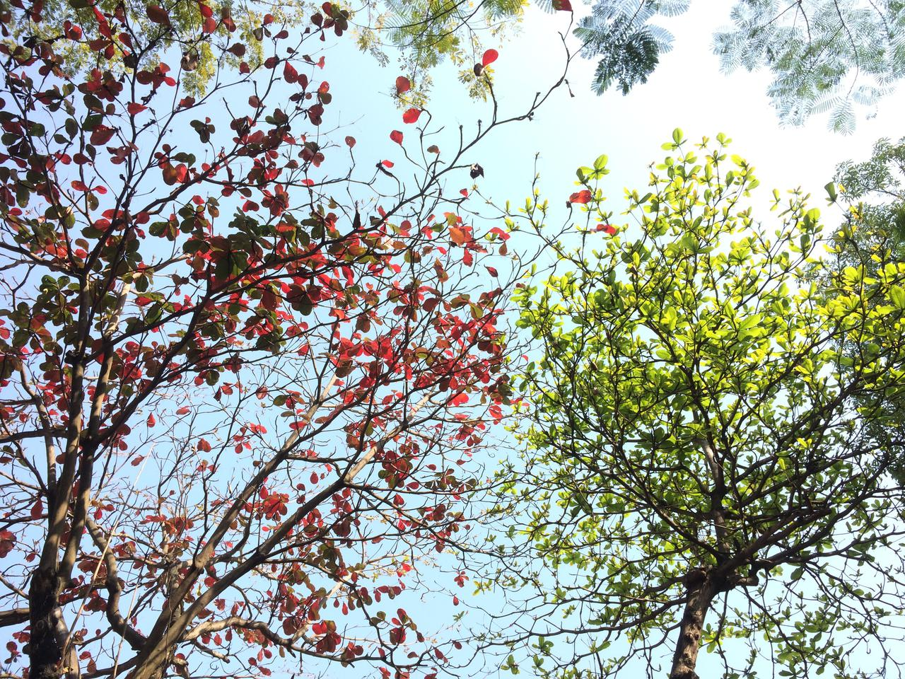branch-bright-color-668553.jpg