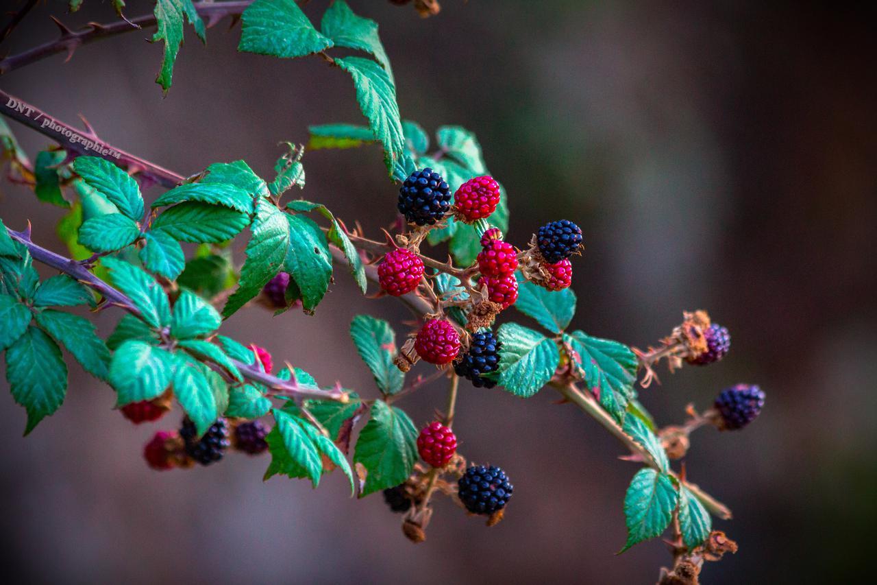 berries-black-blurred-background-975231.jpg