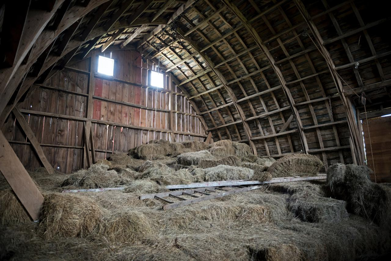 Farm kids remember the barn hay mow as a place of wonder, risk (don't fall down the chute!), and the best place to build forts, swing from the ropes, and find that soft landing.