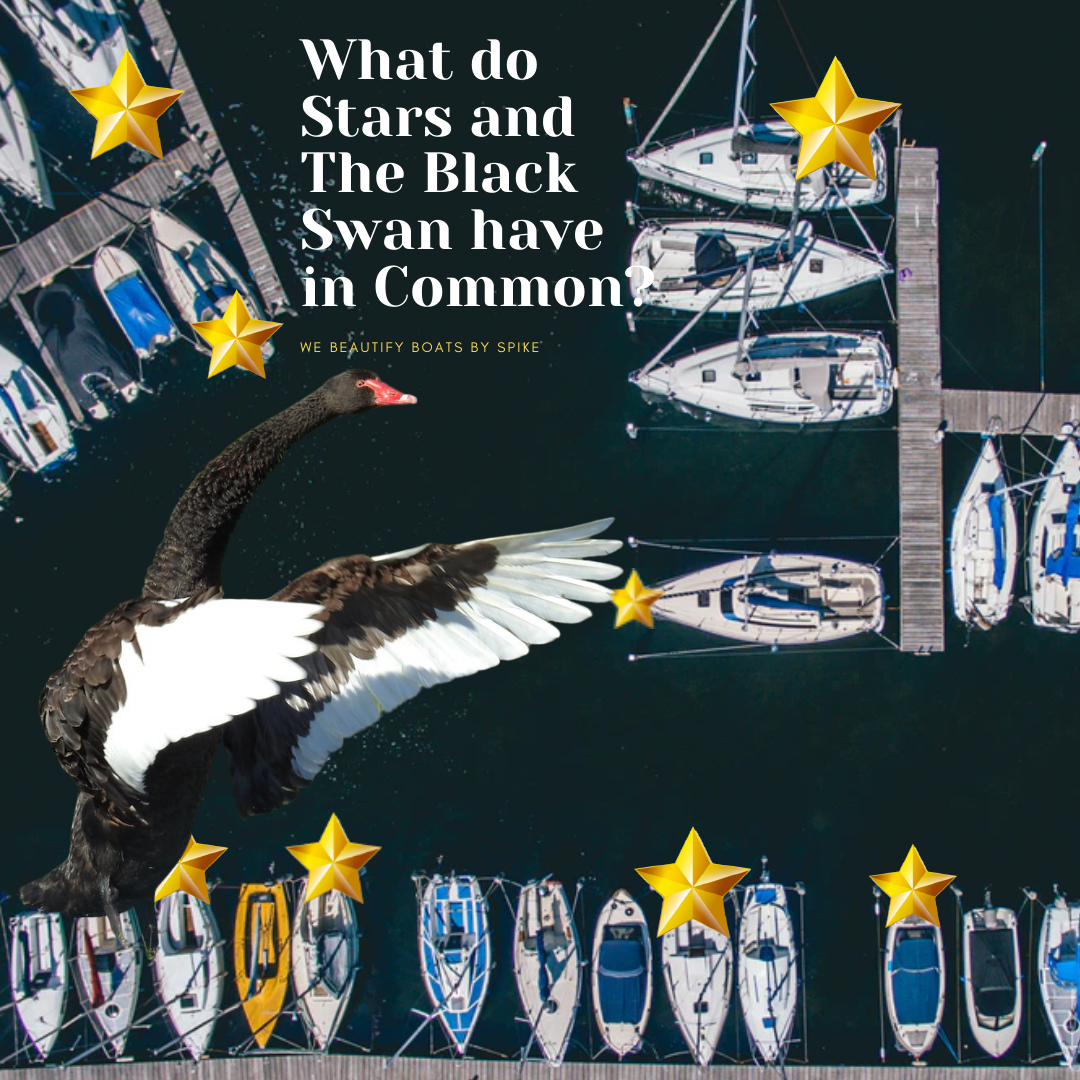what do stars and the black swan have in common_ (1).png