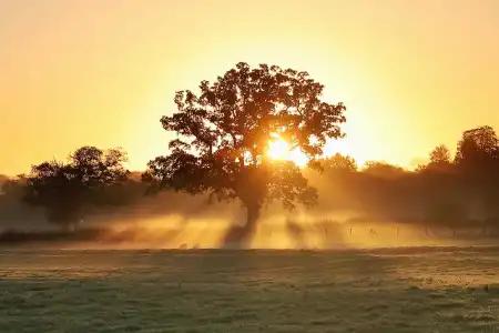 sunrise_field.webp