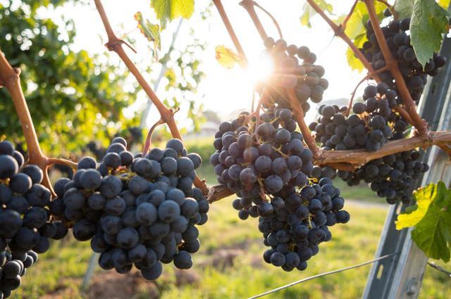 eliasan+consulting+fruit+growers.jpg