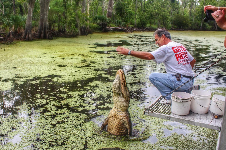 feeding alligators.jpg