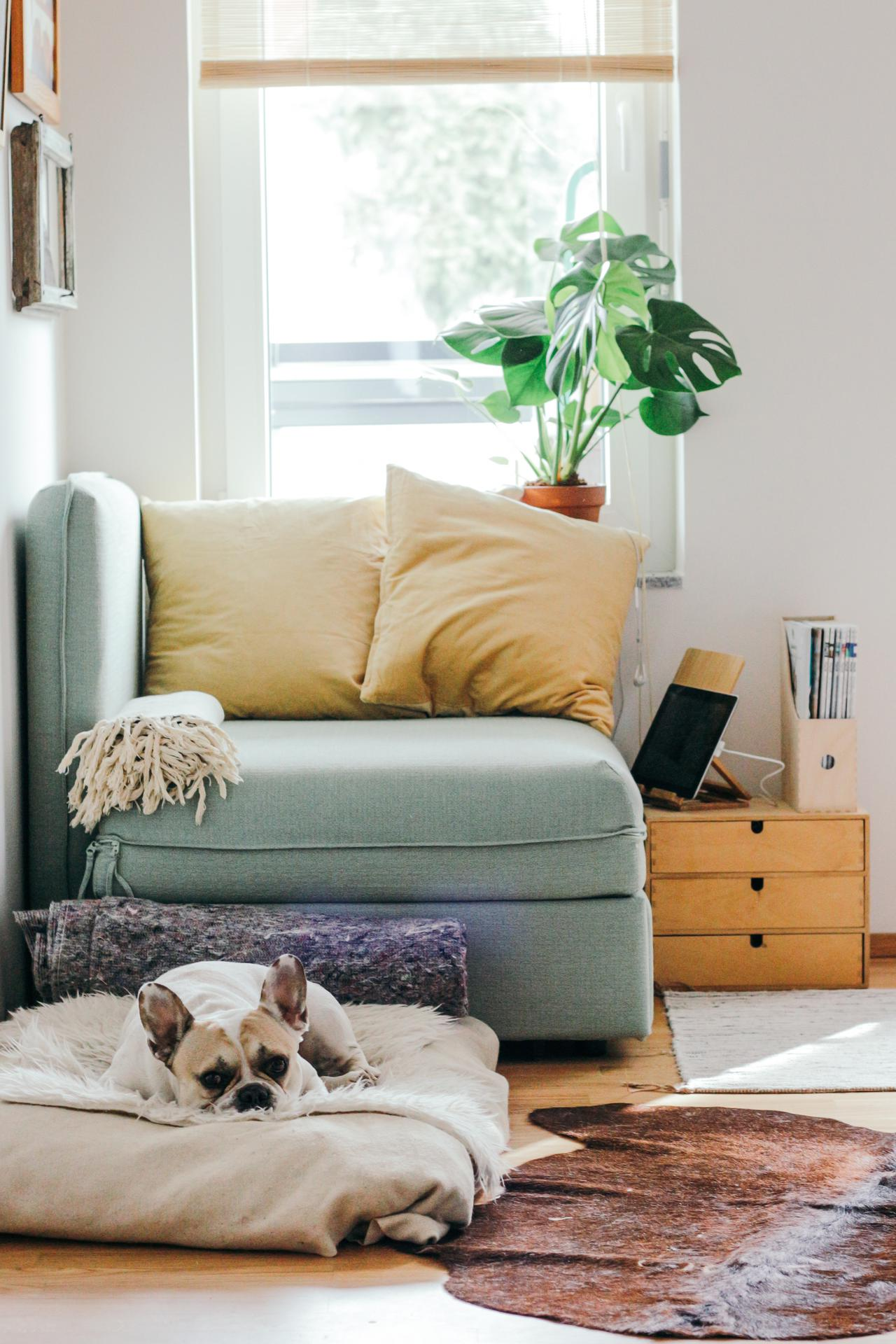 Home Treatment Program