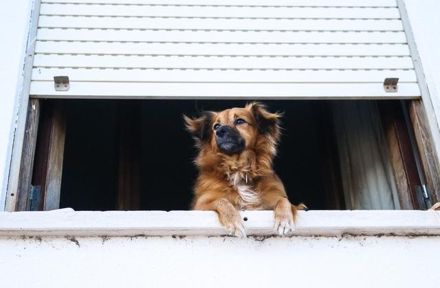 A dog staring out of a window at Companion Memorial Crematorium