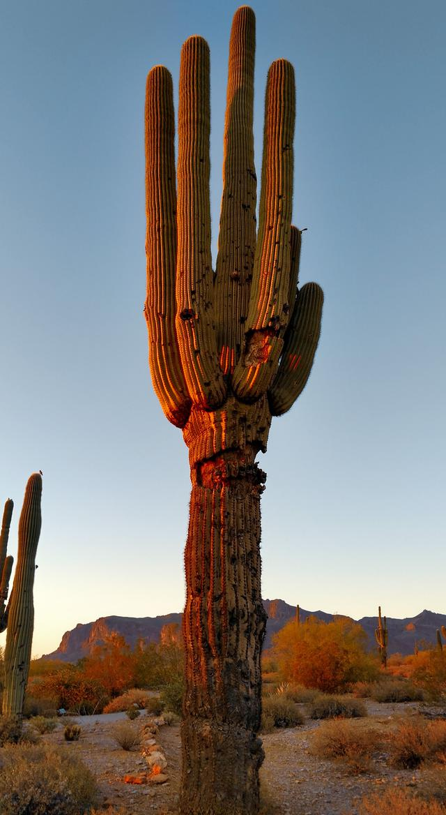 6 benefits of renting with our RV vacation park in Apache Junction, AZ