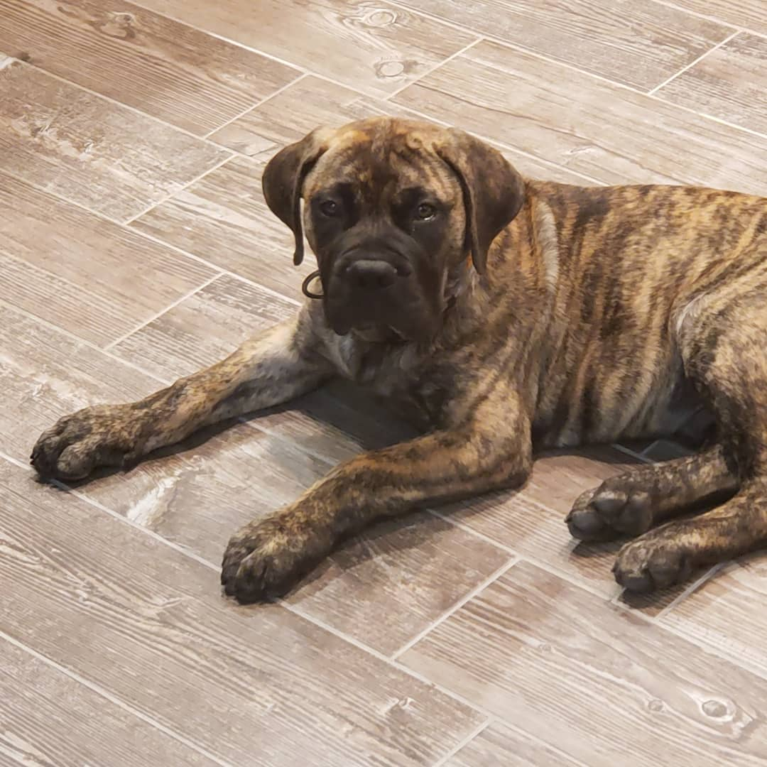 """Meet Beaux  Beaux knows roofing """"Roof Roof"""""""