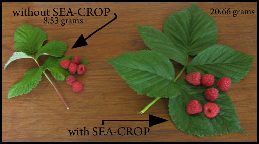 raspberries with arrows.png