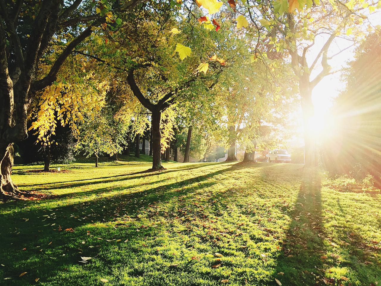 Bellingham trees