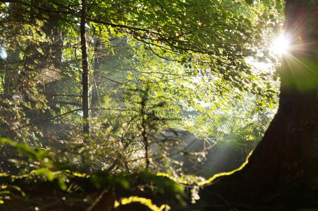 sun-rays-coming-trees-beautiful-summer-green-forest-32506661.jpg