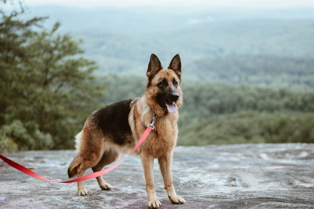 Is your dog right for leak detection training? 5 qualities dogs need for the job