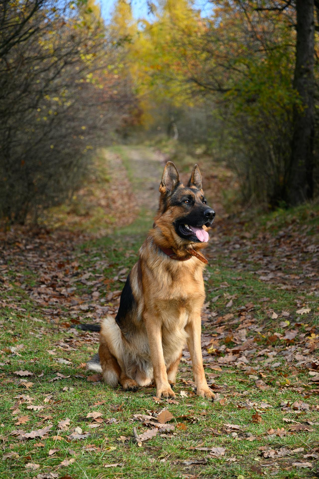 Why use pipeline leak detection dogs?