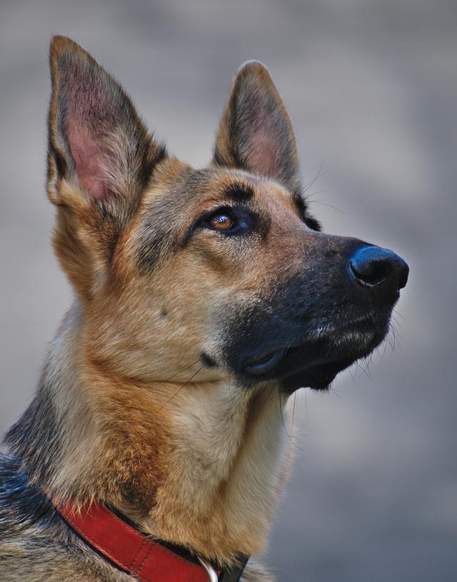 Nala, the sweet shepherd!
