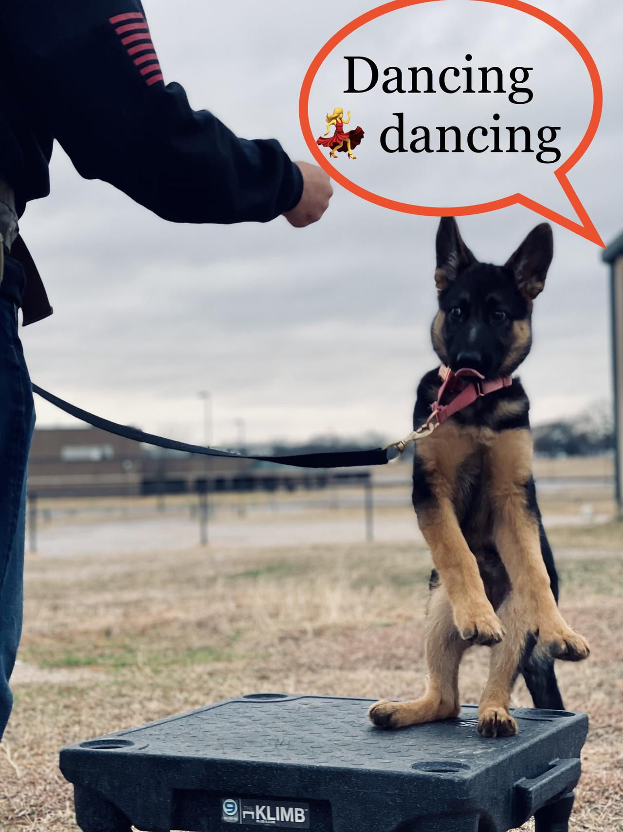 <strong>Board and Train dogs denton texas</strong>