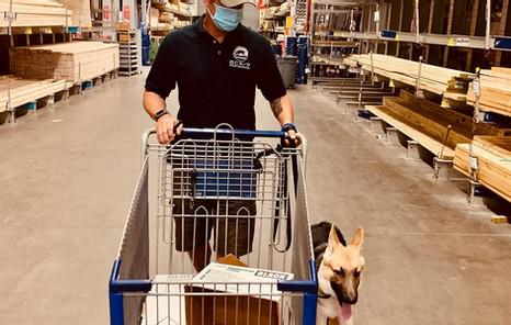 dog obedience training denton, tx