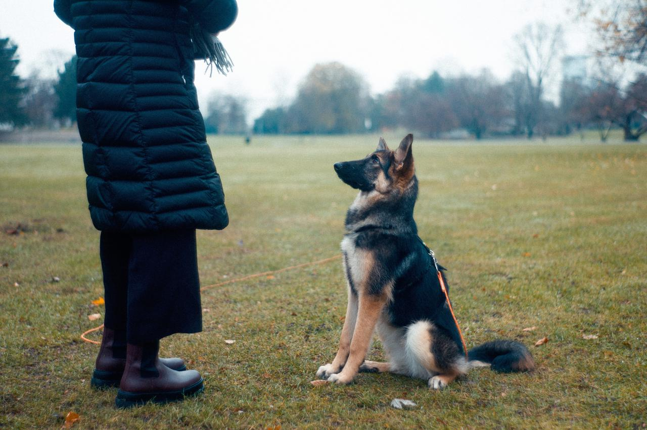 How to train dogs for K-9 narcotics and explosives detection