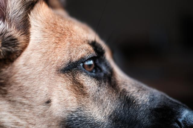 How does K-9 natural gas leak detection work?