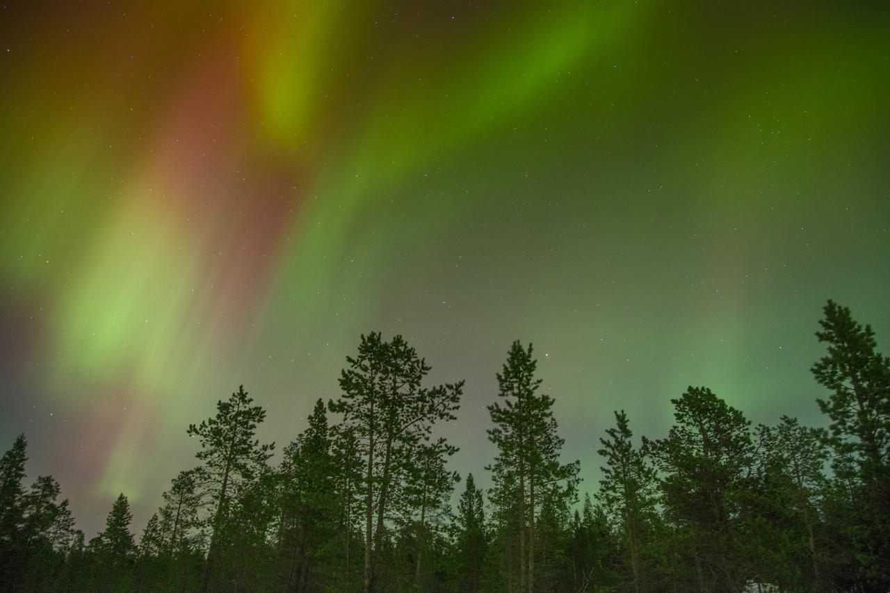 Geomagnetic Fields and Schumann Resonances