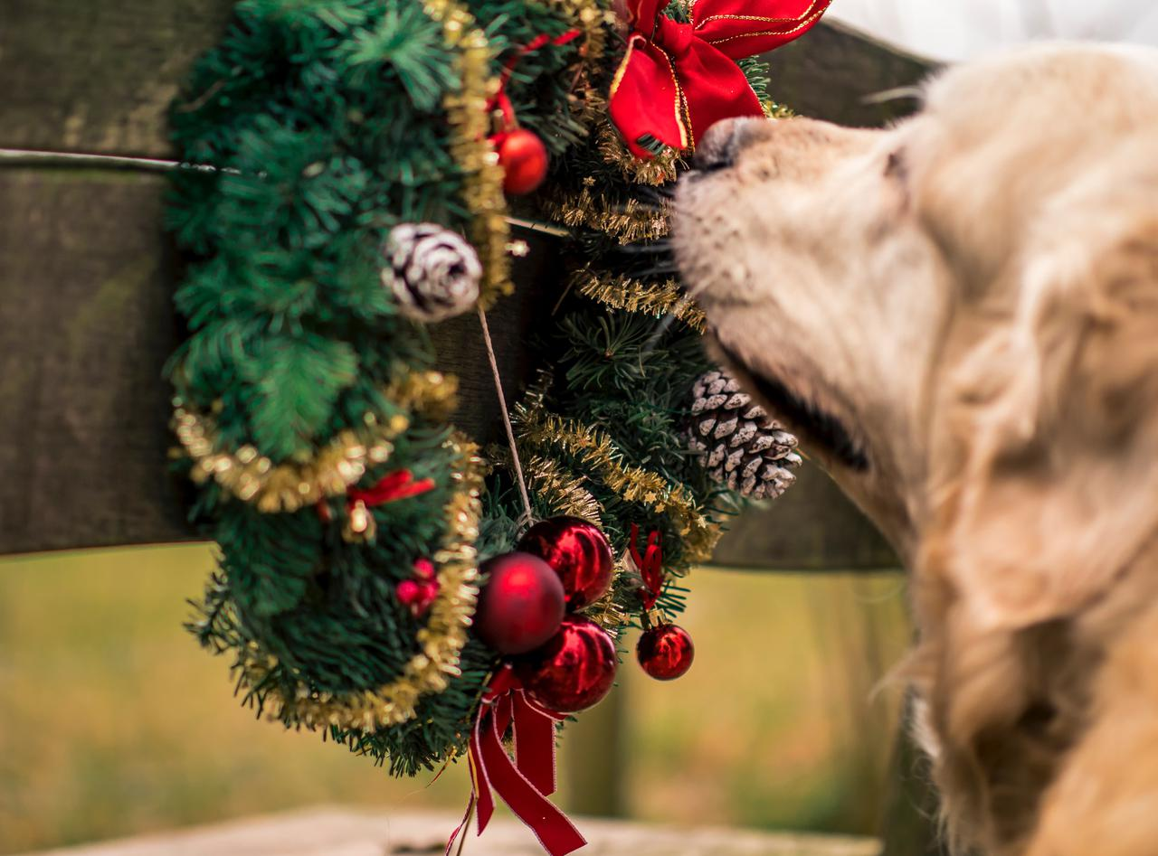 5 holiday foods you shouldn't feed your pet
