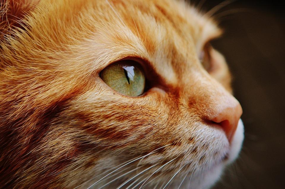cat-1455468_960_720.jpg