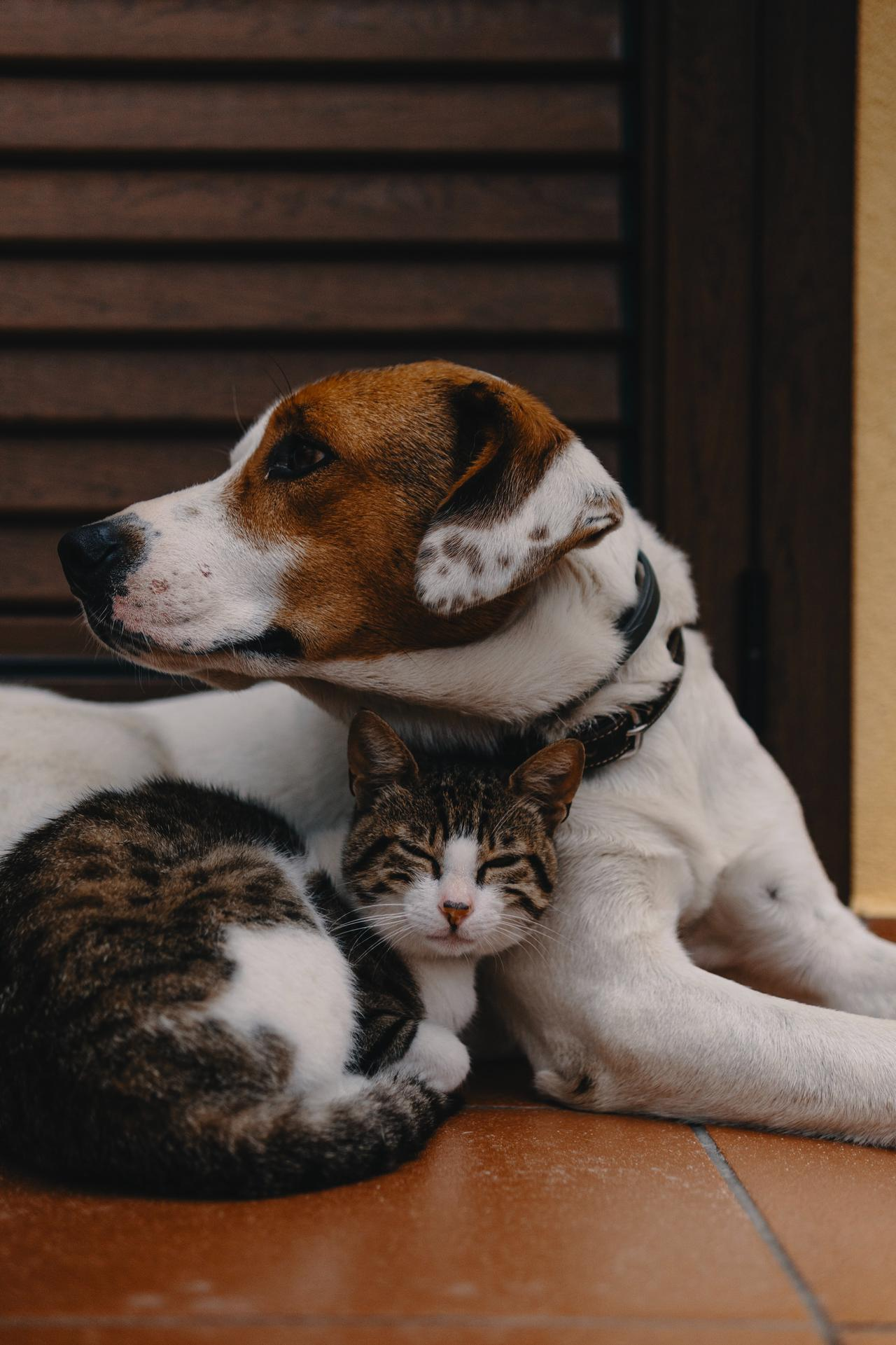 This is an image of spayed and neutered pets.