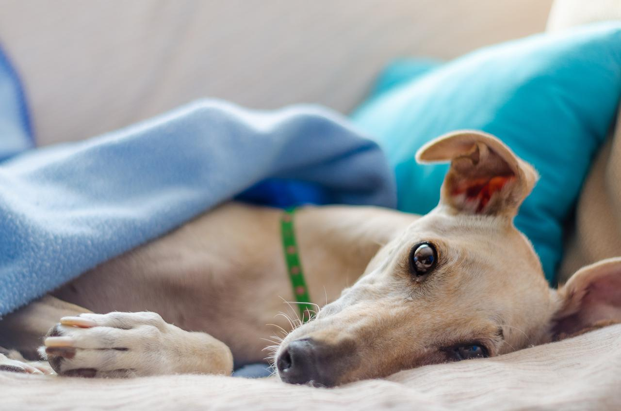 Emergency vet advice: what to do if your pet breaks a leg