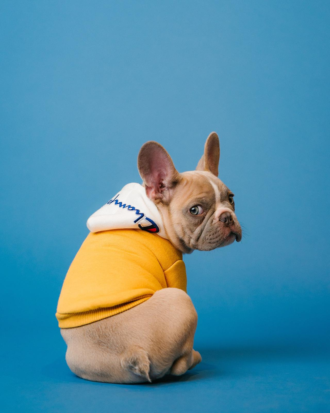 Best flea control treatments for French bulldogs